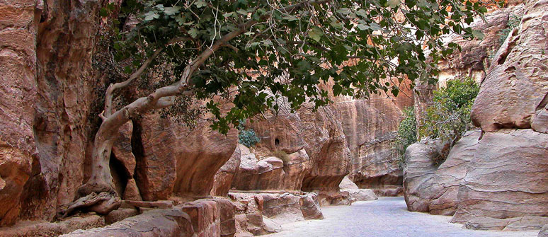 Petra 3D Wadi Rum