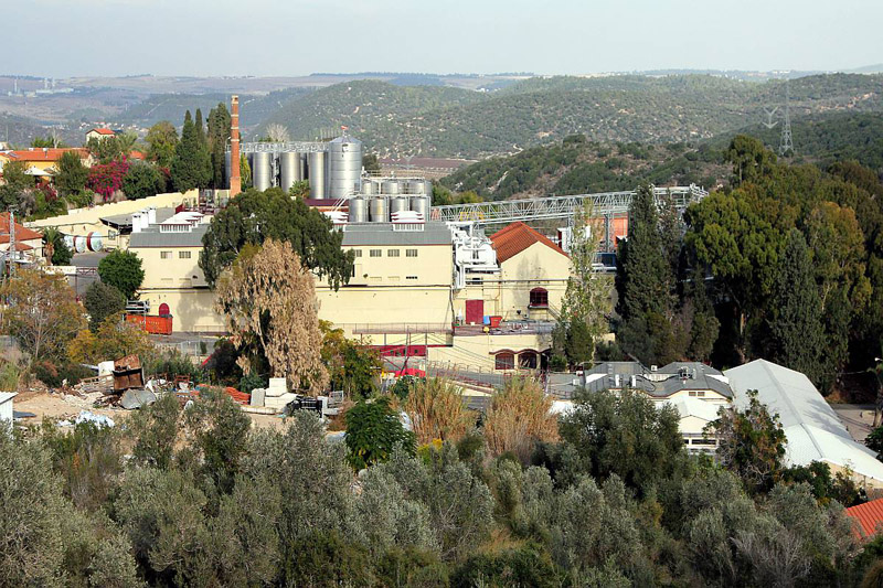 Wine growing in Samaria