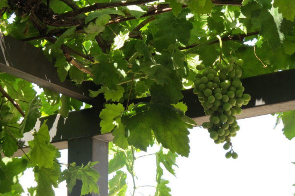 Wine Tasting in Israel