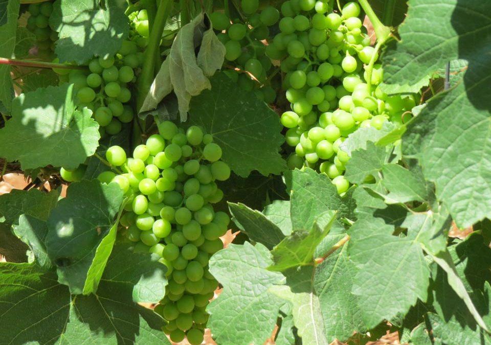 World Class Israeli Wines and Wine Tours