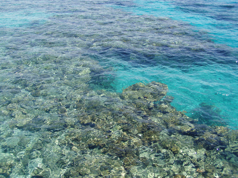 a-beautiful-coral-reef