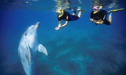 Swimming with Dolphins in Eilat Israel