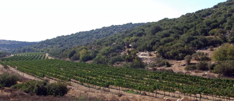 Biblical Tour in the Judean Hills
