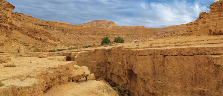 Negev Israel Things to Do