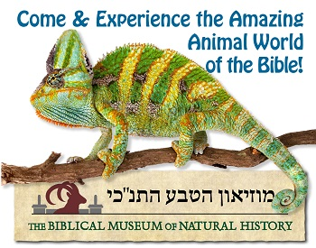 The Biblical Museum of Natural History